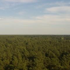 Zakaz wstępu do lasów!
