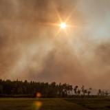 Pożar lasu w Golance!